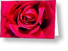 Belle Rose Rouge Greeting Card