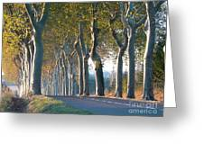 Beloved Plane Trees Greeting Card
