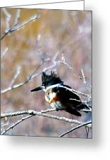 Belted Kingfisher  Greeting Card