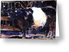 Beltie Greeting Card