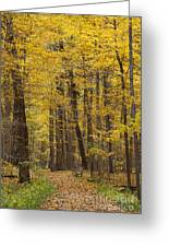 Bench In Fall Color Greeting Card
