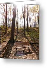Bench In The Woods Greeting Card