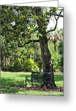 Bench Under The Magnolia Tree Greeting Card