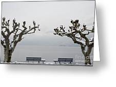 Benches And A Trees Greeting Card