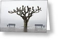 Benches And Tree Greeting Card
