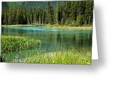 Bend In Mistaya River Greeting Card
