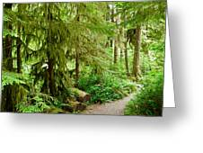 Bend In The Rainforest Greeting Card