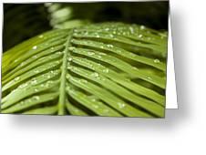 Bending Ferns Greeting Card by Carolyn Marshall