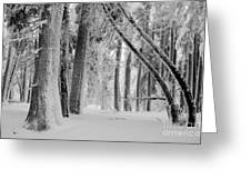 Bending Snow Trees Greeting Card