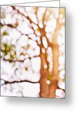 Beneath A Tree 14 5286 Triptych Set 1 Of 3 Greeting Card by Ulrich Schade