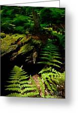 Beneath The Trees - Blue Ridge Mountains Greeting Card