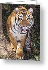 Bengal Tiger By Tree Endangered Species Wildlife Rescue Greeting Card