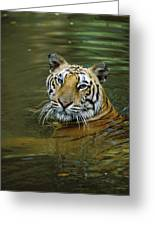 Bengal Tiger In Water Native To India Greeting Card