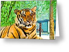 Bengal Tiger Thailand Greeting Card