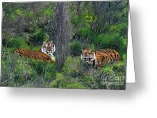 Bengal Tigers On Grassy Hillside Endangered Species Wildlife Rescue Greeting Card