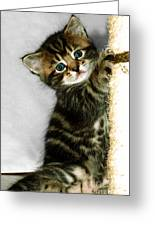 Benny The Kitten Playing Greeting Card