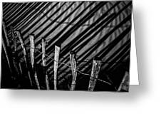 Benone - Shadow Fencing Greeting Card