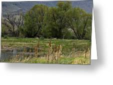 Benson Pond Greeting Card