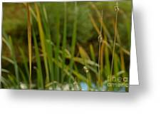 Bent Grass Variation In Nature Greeting Card