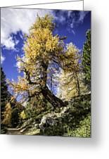 Bent Tree Greeting Card
