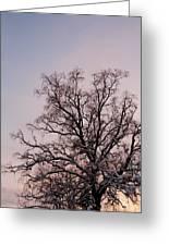 Bergen  Winter Tree Greeting Card by Hakon Soreide