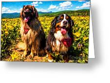 Bernese Mountain Dog And Leonberger Among Wildflowers Greeting Card
