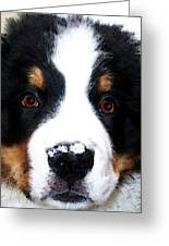 Bernese Mountain Dog - Baby It's Cold Outside Greeting Card