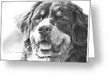 Bernese Mountain Dog Pencil Portrait Greeting Card