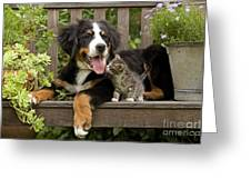 Bernese Mountain Puppy & Kitten Greeting Card