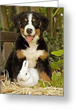Bernese Mountain Puppy And Rabbit Greeting Card
