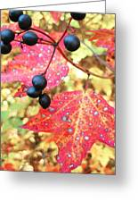 Berries And Leaves Greeting Card