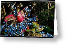 Berries And Red Leaves After The Rain Greeting Card