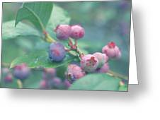 Berries For You Greeting Card