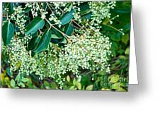 Berries On A Bush Greeting Card