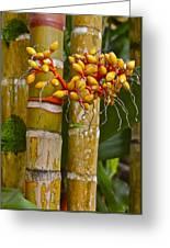 Berries On Bamboo Hawaii Greeting Card