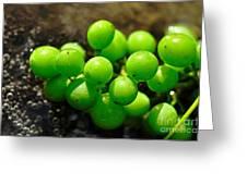 Berries On Water Greeting Card