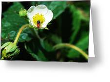 #berry Greeting Card