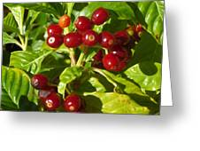 Berry Berry Greeting Card
