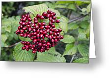 Berry Blast Greeting Card