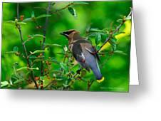 Berry Bounty Hunter Greeting Card