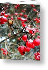 Berry Cold Outside Greeting Card
