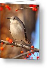 Berry Happy Mockingbird Greeting Card