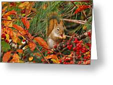 Berry Loving Squirrel Greeting Card