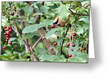 Berry Picker Greeting Card