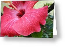 Berry Sprinkle Greeting Card