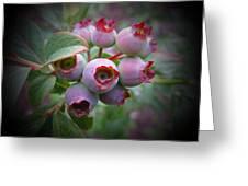 Berry Unripe Greeting Card