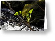 Beside The Waterfall Greeting Card