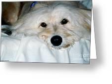 Bessie Eyes Greeting Card