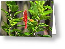 Best Close-up Green Hummingbird On Red Hibiscus Flower. Greeting Card