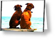 Best Friends Dog Photograph Fine Art Print Greeting Card